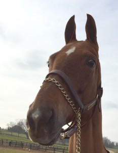 Nina - Official Horse of Lent Madness